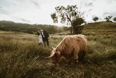 Our stunning Lani and her COVID affected country wedding-turn elopement with some stunning furry friends Unique Dresses, Beautiful Bride, Brides, Wedding Day, Photo And Video, Country, Friends, Modern, Instagram