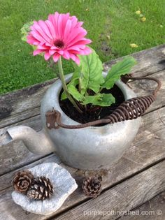 Vintage teakettle as planter, www.purplepottingshed.com