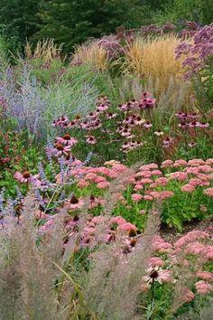 """Prairie Planting"" Russian Sage, Echinacea, Sedums and Grasses by florence - Meadow Garden Prairie Planting, Prairie Garden, Meadow Garden, Garden Cottage, Dream Garden, Garden Grass, Sage Garden, Border Garden, Herbs Garden"