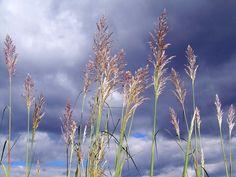 Park, Grass, Tall, Clouds, Sky, Landscape #park, #grass, #tall, #clouds, #sky, #landscape