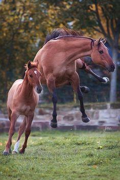 Funny Horses, Cute Horses, Horse Love, Animals And Pets, Baby Animals, Funny Animals, Cute Animals, All The Pretty Horses, Beautiful Horses
