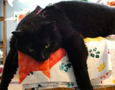 tired kitty on a kitty quilt