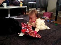 Dog Helps Baby Open The Present