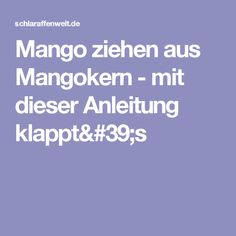 Mango Ziehen Aus Mangokern   Mit Dieser Anleitung Klapptu0027s