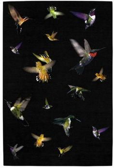 Hummingbird rug by Alexander McQueen for The Rug Company