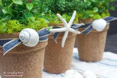 Sand and Seashell Covered Terra Cotta Pots http://www.hometalk.com/8730320/sand-and-seashell-covered-terra-cotta-pots?se=fol_new-20150604&utm_medium=email&utm_source=fol_new&date=20150604&tk=n9h71u