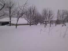 "Vernon Hensley of Elkton, Virginia says ""just a backyard view this morning."" #WHSVsnow"