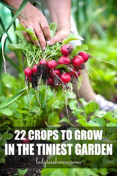 A list of crops you can easily grow even in a tiny garden! #vegetablegardening #smallvegetablegarden #smallvegetablegardenideas