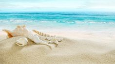 Seashells, Blue Sea