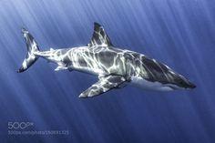 Oceans Deadliest by photographybyleighton #nature #photooftheday #amazing #picoftheday #sea #underwater