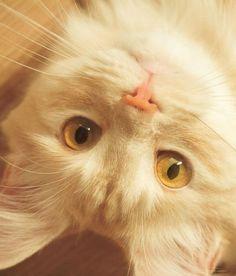 https://fotostrana.ru/usernews/search/животные/