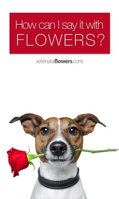 Nothing says it quite like flowers....but what if you're not quite sure what it is you are trying to say?