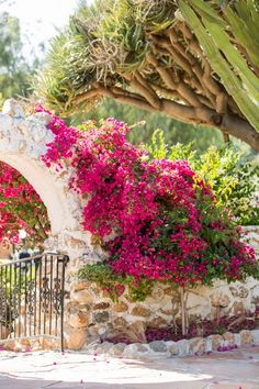 Leo Carrillo Ranch Wedding in Carlsbad with pink bougainvillea. Cavin Elizabeth Photography.