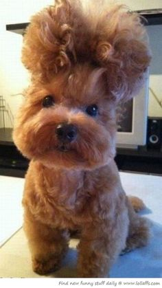 If I had a dog I would definitely want it to look like this so we could have matching hairdos