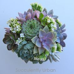 Succulent floral designs specializing in succulent wedding bouquets, succulent and Cactus arrangements, centerpieces, wedding favors & gifts. Wedding Table Centerpieces, Flower Centerpieces, Flower Arrangements, Wedding Bouquets, Wedding Flowers, Cactus, Wedding Motifs, Succulent Bouquet, Diy Bouquet