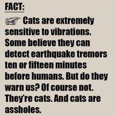 #catsareassholes