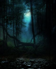 Dark and eerie. Beautiful World, Beautiful Places, Beautiful Pictures, Beautiful Forest, Dark Forest, Forest Path, Magic Forest, To Infinity And Beyond, Dark Wood