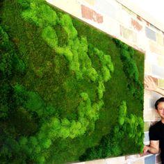 CC-LQ-02 Green wall detail, Liquidology Juice Bar