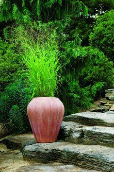 1000 images about pots on pinterest planters grasses for Tall grasses for pots