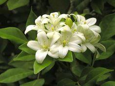 Myrto for wedding flowers
