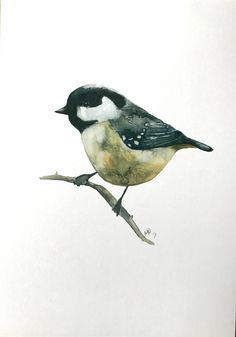 Excited to share the latest addition to my shop: watercolor coal tit bird painting / illustration print. Christmas gift maybe? Coal Tit, Dark Matter, Christmas Gifts, Birds, Etsy Shop, Watercolor, Studio, Illustration, Handmade