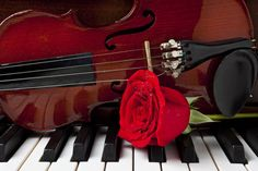 Violin Art - Violin and rose on piano by Garry Gay Violin Art, Piano Art, Piano Music, Violin Instrument, Piano Photography, Rock Y Metal, Romantic Music, Piano Keys, Music