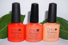 🔥 ℕ 𝕖 𝕨   ℂ 𝕠 𝕝 𝕠 𝕦 𝕣 𝕤 🔥 Book your CND Shellac Manicure in now and try out these new hot colours   #summernails #newnailcolour #coralnails #hotnails #nailinspo #nailsofinstagram #shellacmanicure #shellacnails #cndshellac #cnd #cndcolours #cndnails #cndworld #cndnails #localnailtech #mobilenailtech #mobilenailtechnician #mobilebeautician #mobilebeauticians