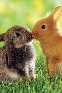 Dos conejos besandose