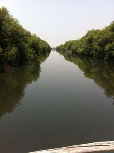 Mangrove everywhere~