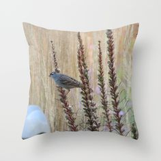 'White Crowned Sparrow' throw pillow by LLL Creations.  This design is available in many different products.    #society6 #society6_products  #LLLCreations #throwpillows #whitecrownedsparrow