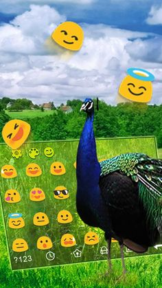 """""""National bird of india is here to enthrall your mobile screens. Download the peacock feather keyboard now. #peacockkeyboard #featherkeyboard #bird #peacockbirdkeyboard #androidtheme #android #cmlauncher #googleplaystore #keyboard #apps #cmlauncher #themesforkeyboards #freekeyboards"""" http://bit.ly/2rxhN74"""