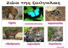 Ζήση Ανθή : Εποπτικό υλικό : λίστες αναφοράς με τα ζώα της σαβάνας , της ζούγκλας και των τροπικών δασών για το νηπιαγωγείο . Λίστες αναφο...