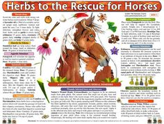 HERBS TO THE RESCUE FOR HORSES -- This herbal treatment and dosage guide makes choosing and using herbal remedies for horses simple. The home treatments chart is beautifully illustrated and packed with an extensive ailments list, making it easy to choose the right herbal remedy and dose for a horse in no time.  http://www.petremedycharts.com/Horse%20Charts/Horse.html