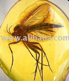 Baltic Amber Fossil Insect Inclusions For Collectors Photo, Detailed about Baltic Amber Fossil Insect Inclusions For Collectors Picture on Alibaba.com.