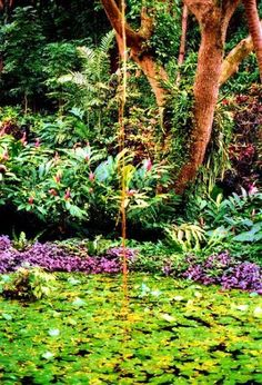 Garden of the Sleeping Giant - Botanical Garden - Nadi, Fiji.Garden Of The