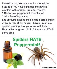 Getting Rid Of Spiders In Your Home