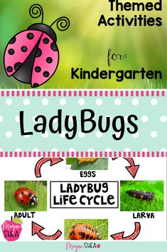 Don't miss this ladybug theme! We used these activities in kindergarten, however, they would also work for first-grade. This would be perfect for a ladybug unit, insect unit, spring or anytime! Elementary Science Classroom, Primary Science, Kindergarten Teachers, Elementary Education, Science Education, Science Resources, Kindergarten Activities, Classroom Activities, Classroom Ideas