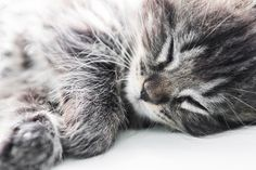 So, why do cats purr? Let's look at how cats purr and why cat purring isn't always a sign that your kitty is content.