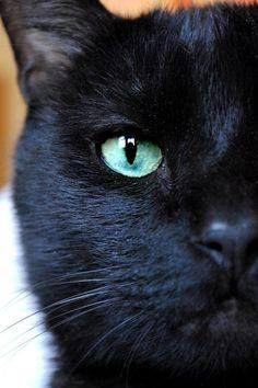 Black cat very teal colored eyes