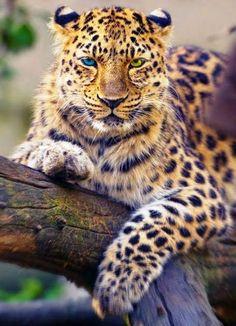 Oh diese wunderschönen Augen..