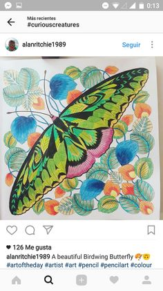 Coloring Butterfly Book Drawing Art Drawings Books Butterflies