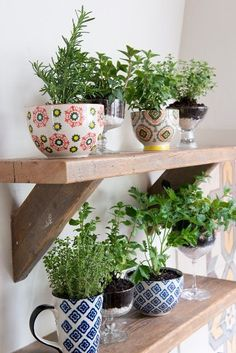 kitchen herb shelf