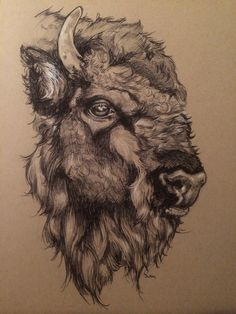 Drawing all night, listening to thunder. Buffalo Animal, Buffalo Art, Buffalo Skull, Animal Sketches, Animal Drawings, Bison Tattoo, Buffalo Painting, Pencil Art Drawings, Owls