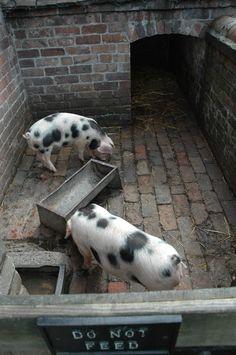 Pig shed, Ironbridge Cool Sheds, Pig Pen, Nigerian Dwarf, Goat Farming, Hobby Farms, Handmade Soaps, Georgian, Pigs, Colonial