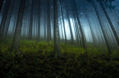 in the forest. Photo by Jacek J�drzejczak � National Geographic Your Shot