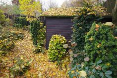 Autumn carpet of Lime tree leaves | Flickr - Photo Sharing!