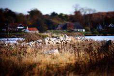 Med Brunshuse i baggrunden #visitfyn #fyn #nature #visitdenmark #naturelovers #nofilter #natur #denmark #danmark #dänemark #landscape #assens #mitassens #vildmedfyn #fynerfin #assensnatur #vielskernaturen #visitassens #instapic #picoftheday #sea #november #stengærde