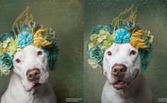 """Sophie Gamand Crowns Mickey The """"Pit Bull,"""" The Dog Sentenced To Life In Prison"""