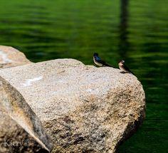 Birds on a Rock #bird #photography #nature #rock #water