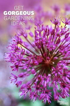 Create the perfect front yard and backyard landscapes with our gardening tips. We'll tell you about beautiful annual, perennial, bulb, and rose flowers, as well as trees, shrubs, and groundcovers that put on a year-round gard∕